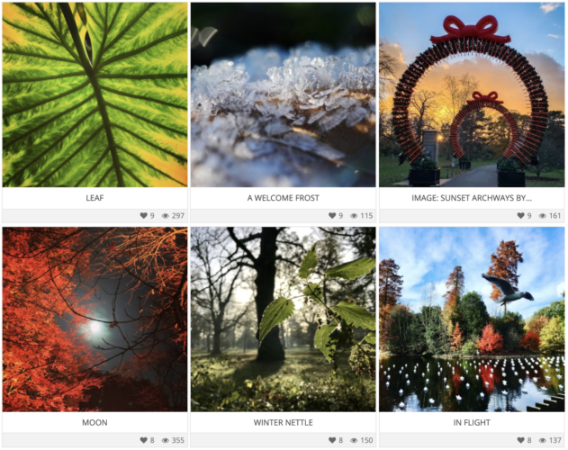 RBG Kew photo competition entries